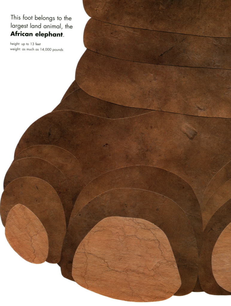 "Zoomed in image of an African elephant foot with the text: ""This foot belongs to the largest land animal, the African elephant: height up to 12 feet, weight as much as 14,000 pounds."" Illustration from ""Actual Size""."