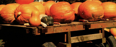 """Many pumpkins and a few squash sit on a wooden table. Image from """"More, Fewer, Less."""""""